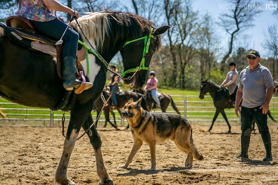 de-spook-horse-clinic_0032