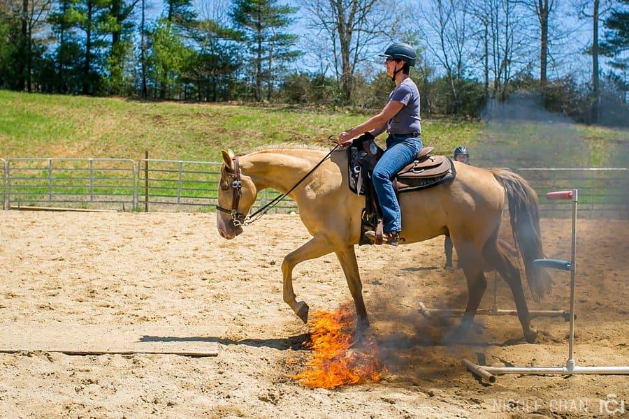 de-spook-horse-clinic_0042