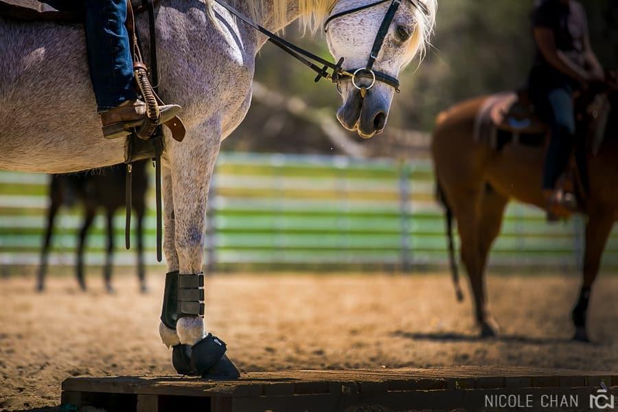 de-spook-horse-clinic_0044