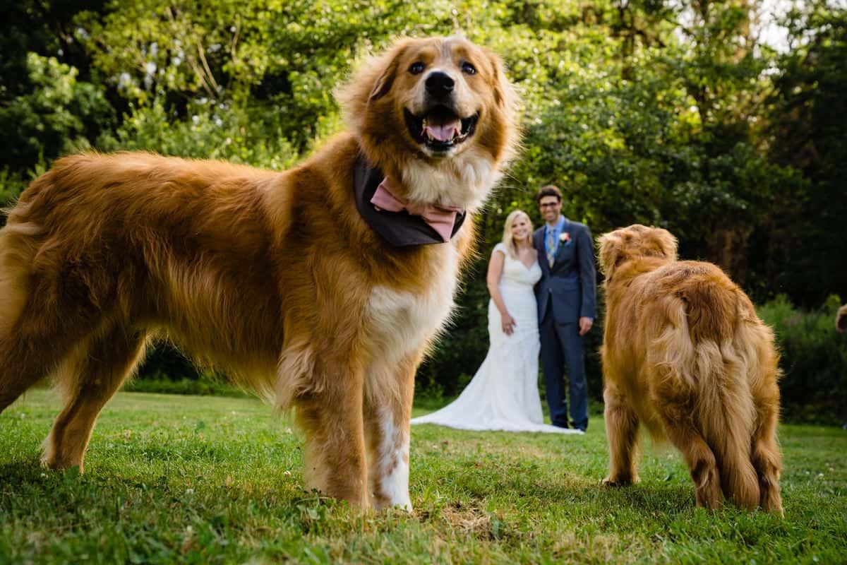 Madeline-Adam-Larz-Anderson-Park-Wedding-Photos-Brookline-MA-Wedding-Photographer-Nicole-Chan-Photography-0012-1