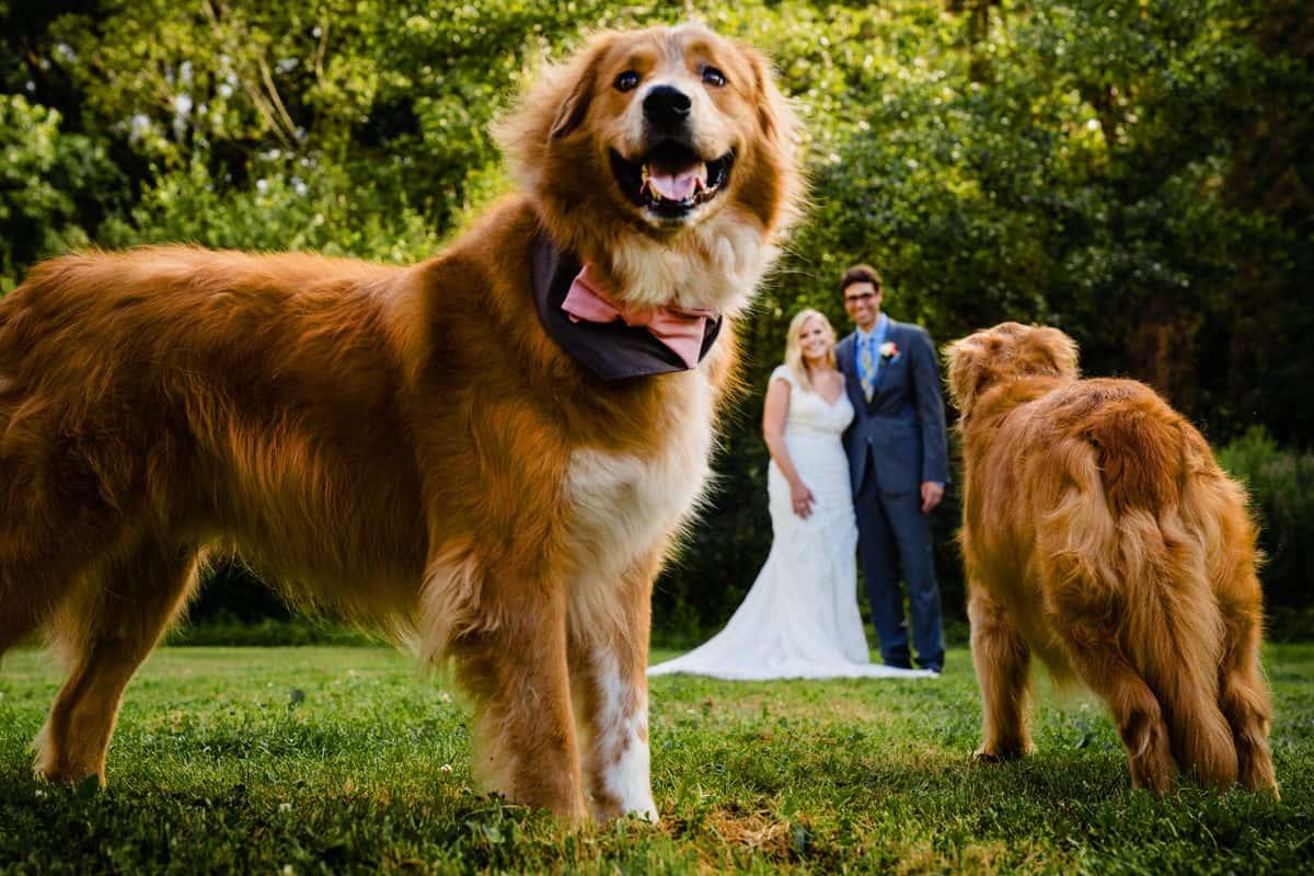Madeline-Adam-Larz-Anderson-Park-Wedding-Photos-Brookline-MA-Wedding-Photographer-Nicole-Chan-Photography-0012
